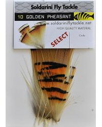 Soldarini Golden Pheasant